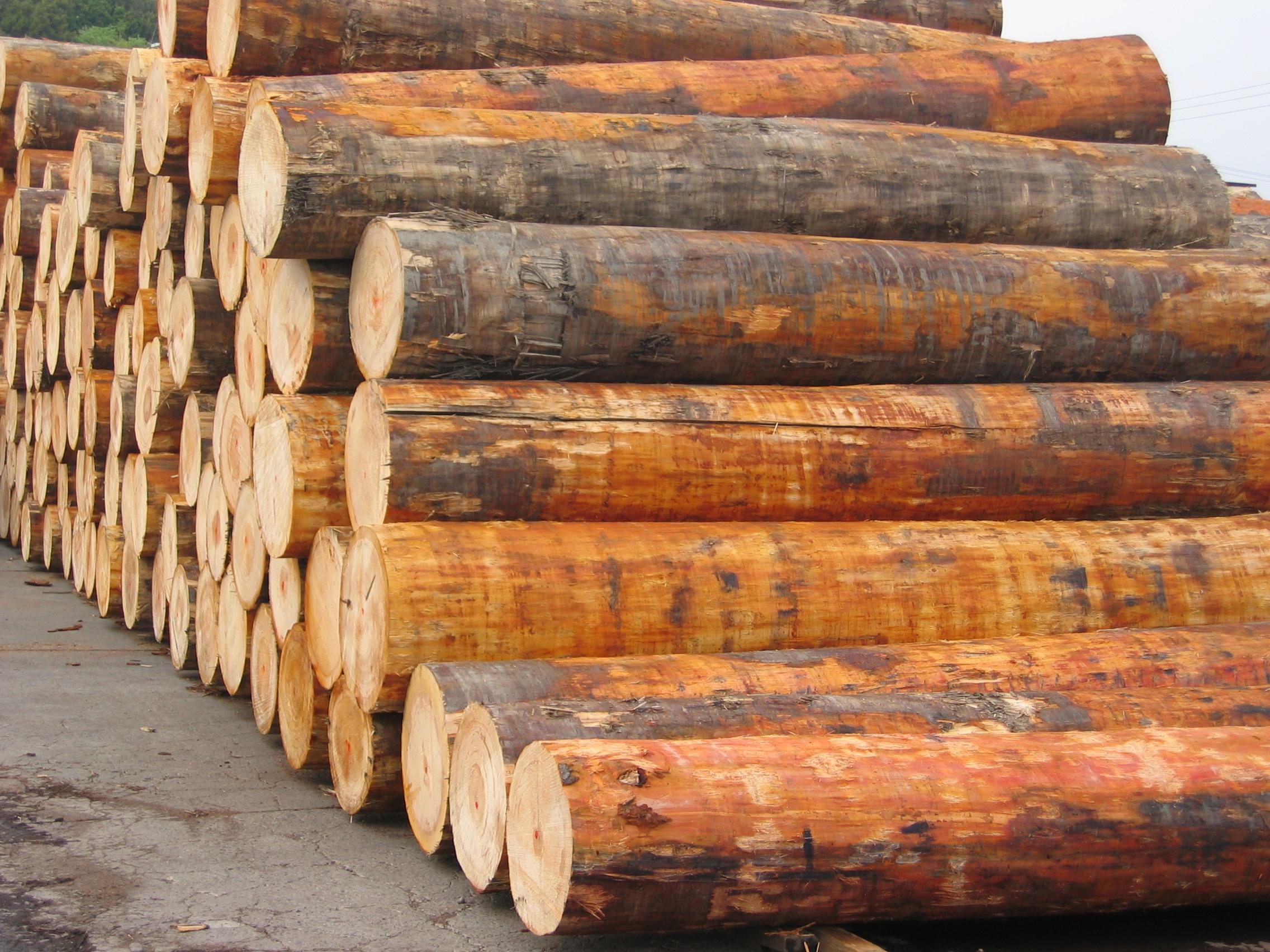 北米から輸入された目細のベイツガ丸太