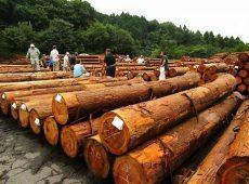 【多摩産材の原木市場】