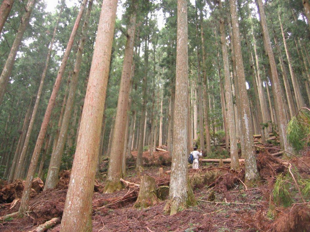 【吉野の森林の様子】
